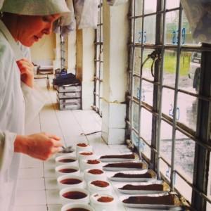Ringtons-tea-Tanzania-waitrose