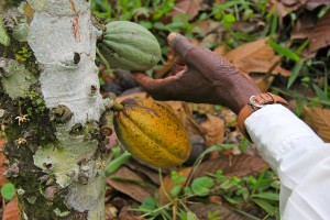 individual care DRC cocoa